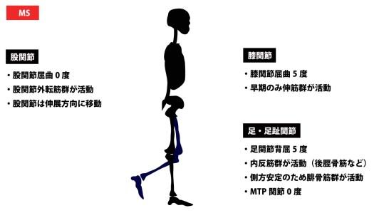 歩行周期|ミッドスタンス