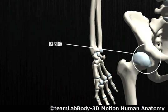 股関節 (2)
