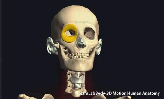 眼輪筋眼窩部