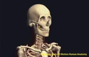 頚長筋上斜部