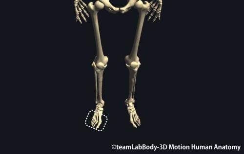中足骨・趾骨