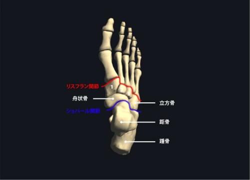 足根骨上面|各部位の名称