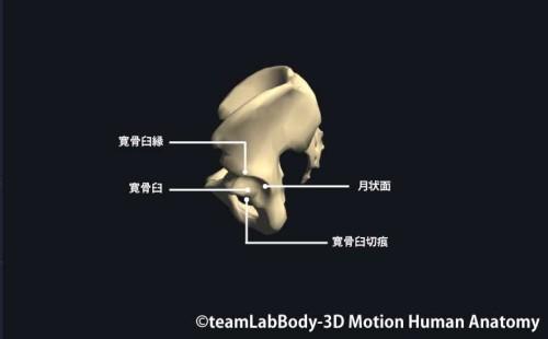 骨盤側面|各部位の名称