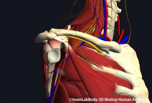 鎖骨下筋下方の神経と血管
