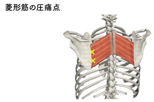 大菱形筋の圧痛点1