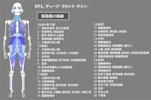 アナトミートレイン:筋膜:DFL