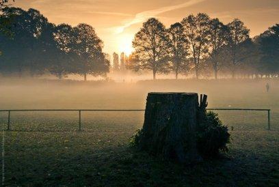 Baumstumpf im Gegenlicht am frühen nebeligen Morgen