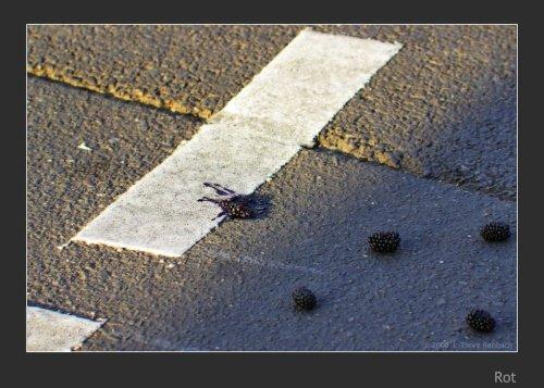 Brombeere bei Rot überfahren, auf einer Strasse liegend.