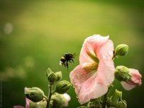 Blume fotografiert mit Panasonic GX80