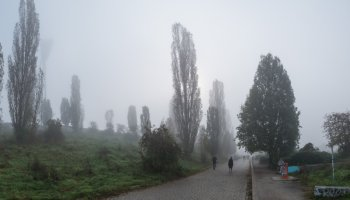 Nebel im Mauerpark