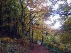 Forêt de Stara Planina ou Grand Balkan, Serbie