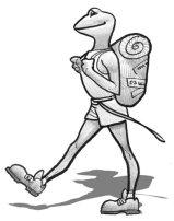 Pidapi V6 : la grenouille globe trotteuse