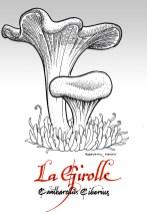 Girolle - cantharellus cibarius