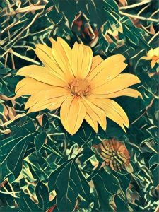 "A photo of a yellow flower with a Prisma filter applied called ""Dreams"""