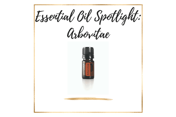 Essential Oil Spotlight_ Arbovitae