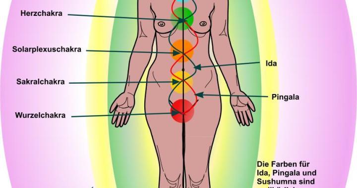 Das Energiesystem des menschlichen Körpers