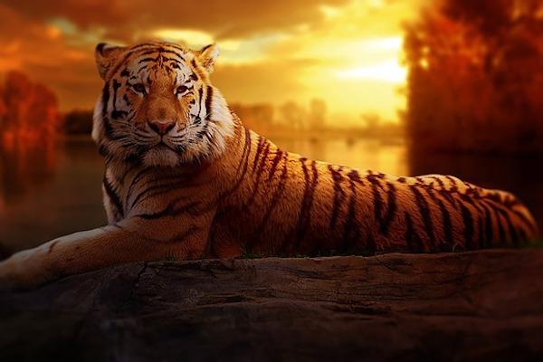 El Poder del Tigre Reiki