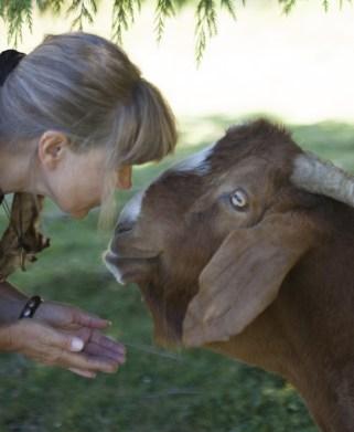 Rose offers Reiki to Goat ©Annie Marie Musselman www.reikishamanic.com