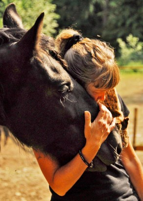Handsome Friesian Dante offers affection to Rose De Dan after a wonderful, but tiring day teaching students at Serenity Equine Rescue. Photo ©2013 Debbie Noyes