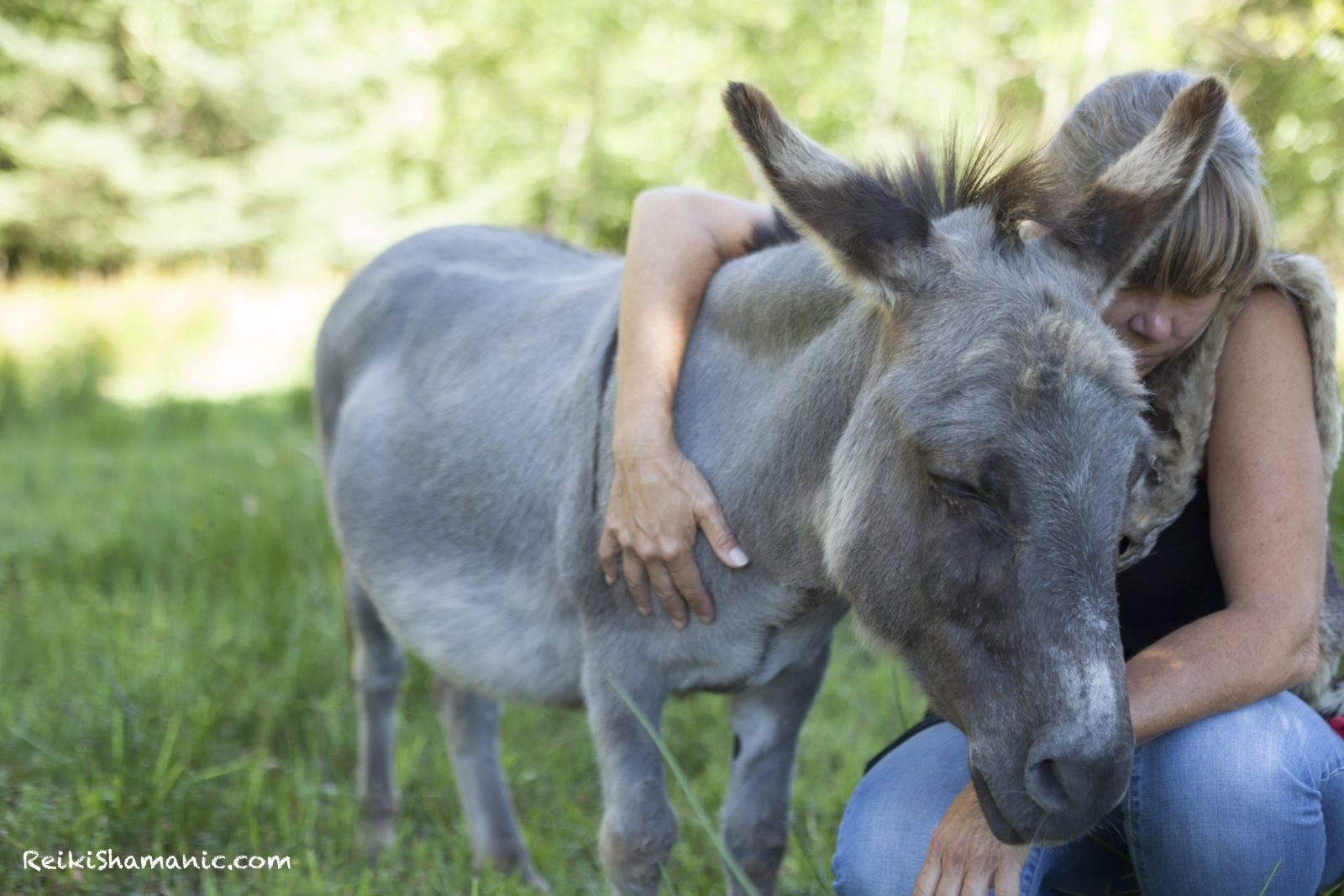 Rose offers Reiki to donkey Chip, ©Annie Marie Musselman