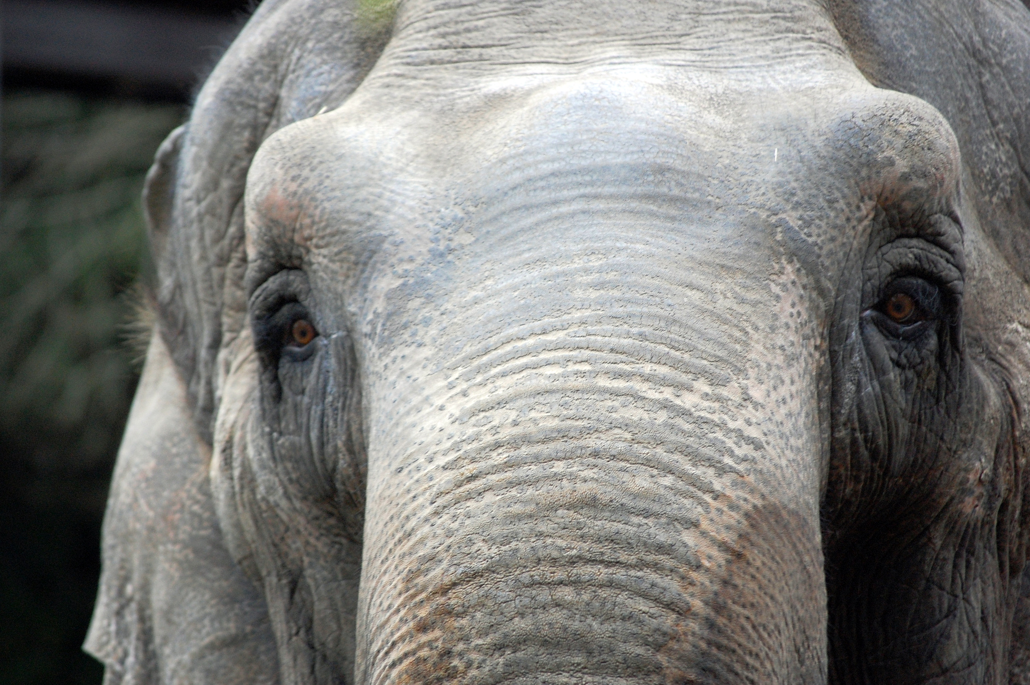 Listening To Zoo Animal Ambassadors