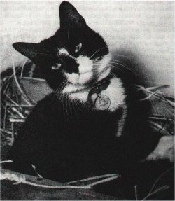 Celebrating Able Seacat Simon And Other Animal Heroes On Memorial Day