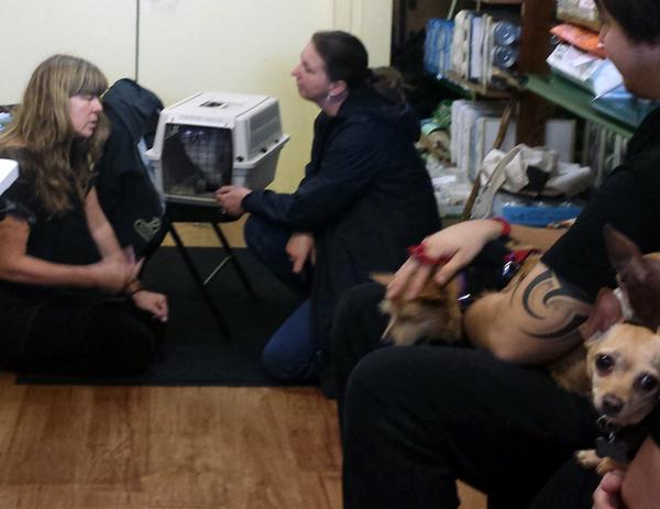 Rose De Dan offers Reiki to Jasmine the cat www.reikishamanic.com