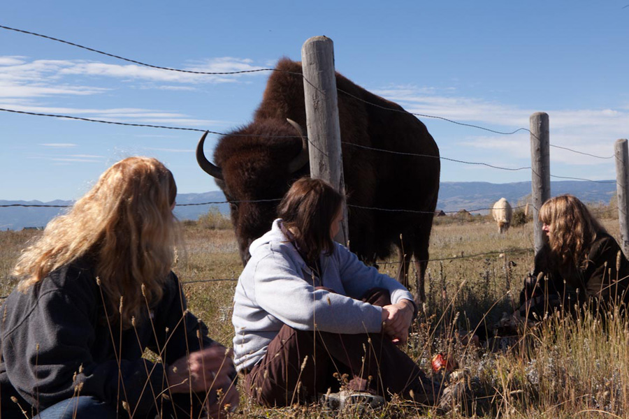 Bluebell the buffalo joins us at A Walk on the Wild Side 2014 at Earthfire Institute Photo: ©Andrew Hinton