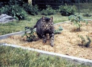 Mesach in the Garden, ©Rose De Dan www.reikishamanic.com