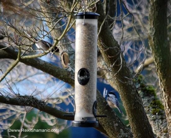Birds at new feeder, ©Rose De Dan www.ReikiShamanic.com