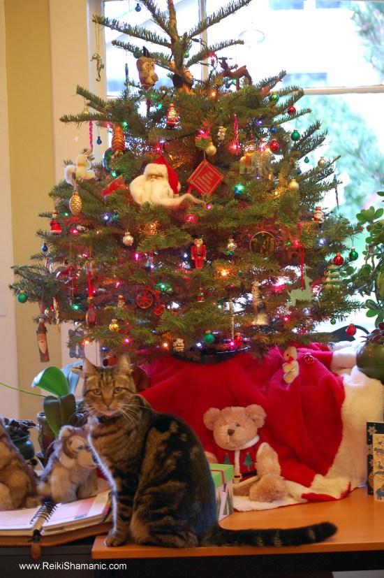 Manitou photobombs the Christmas Tree