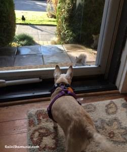 An Old Dog Teaches New Gratitude