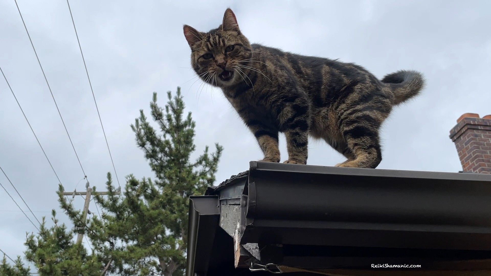 Cat Manitou And The Roof Dismount