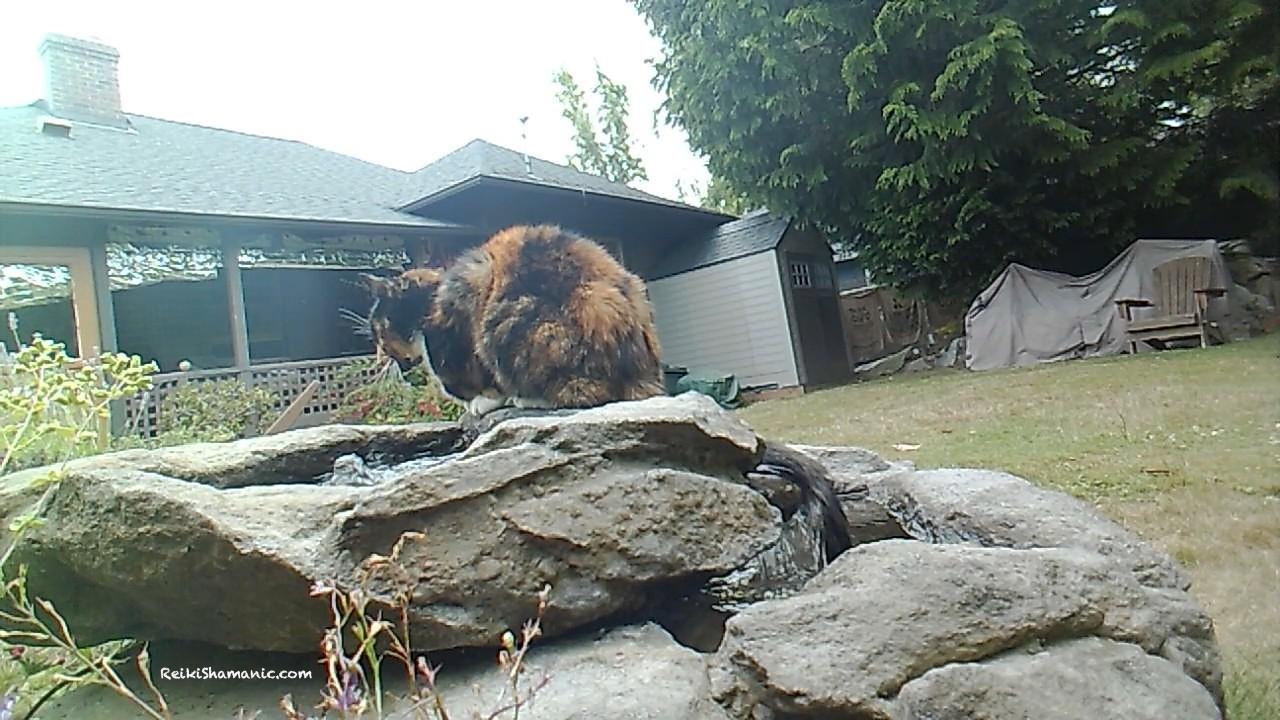 Reiki Energy Healing For The Calico Cat