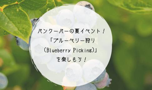 バンクーバーの夏イベント!「ブルーベリー狩り(Blueberry Picking)」を楽しもう!