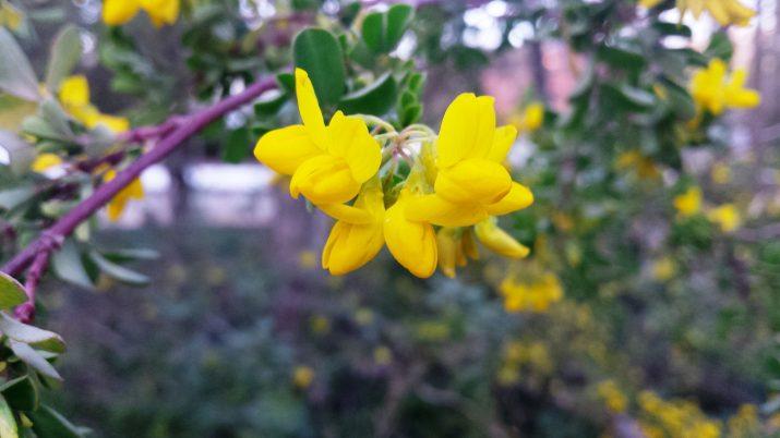 Flores en la Quinta de los Molinos