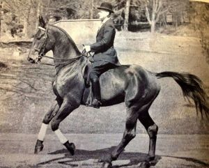 Fritz Stecken riding according to HDV12