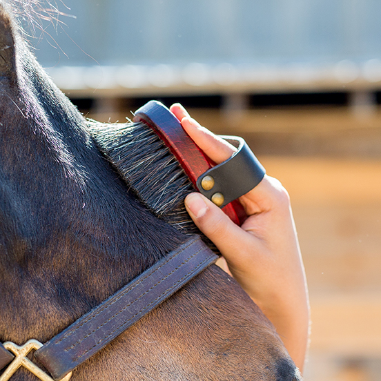 soft horse face brush