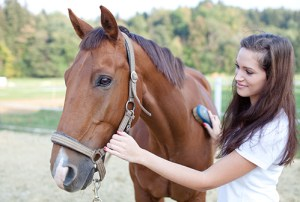 grooming your horse safely