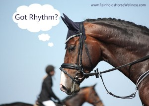 dressage horse asking got rhythm