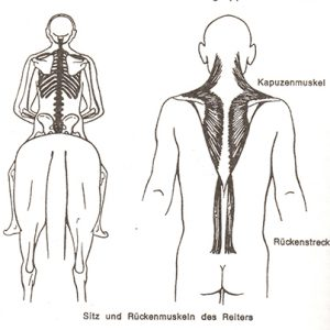 back muscles of the rider