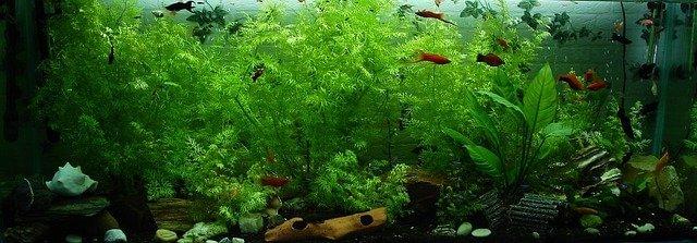 Schlammsauger für Aquarium