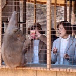 Reisetipps Kyoto: Monkey Park