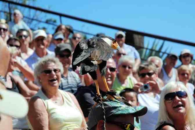 Palmitos Park Vogelshow Gran Canaria