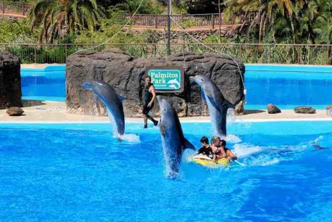 Palmitos Park Dolfijnenshow Gran Canaria