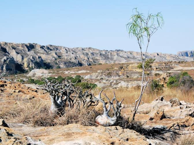 Isalo Nationaal Par, Madagascar, madagaskar
