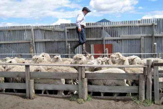 Schapenhouderij en ranch - Chili