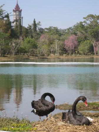 National Kandawgyi Garden