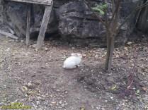 Kyaukkalat