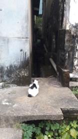 beleidigte Katze kehrt uns den Rücken zu